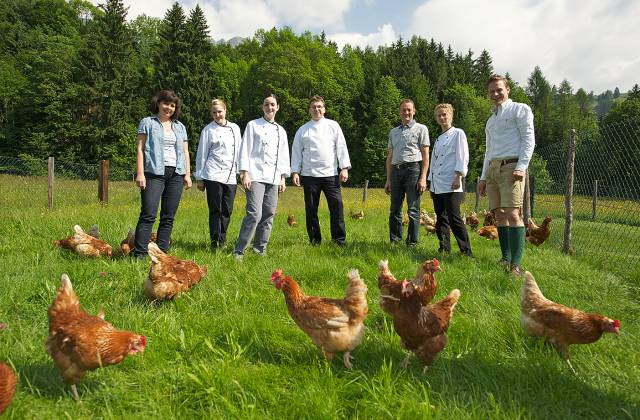 Free-roaming chickens in the Salzburger Land