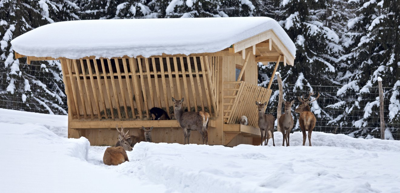 Deer at the feeding trough.